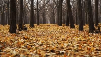 Иммунолог Болибок рассказал о возможном вреде опавшей листвы