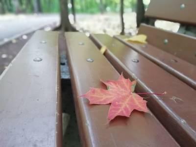 Об опасности упавшей листвы для некоторых людей предупредил врач