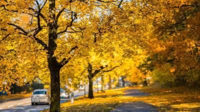 Аллерголог Мухина рассказала, чем может быть вредна осенняя листва