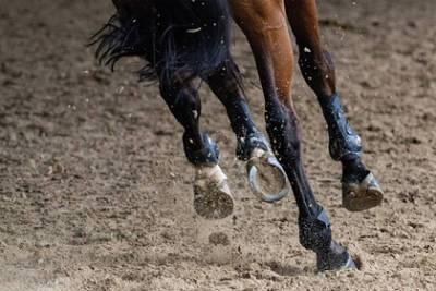 Девушка хотела вылечить лошадь и случайно отравила бывшего жениха
