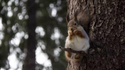 Леший из Медведкова: мужчина гонял белок по парку, требуя научить его разговаривать с деревьями