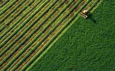 Рынок земли: в Украине заключили уже почти 30 000 земельных сделок