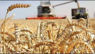 Эксперт рассказал, почему урожайность зерновых в России выросла на 23%