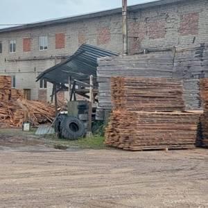 Во Львовской области лесники незаконно вырубили леса на 2,5 млн грн. Фото