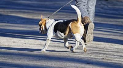В Воронеже злостный нарушитель ПДД насмерть сбил на переходе пенсионера с собакой