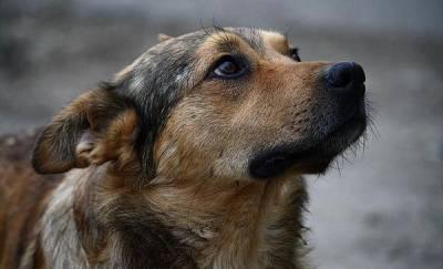 Стало известно, при каких условиях пойманных в Тюмени бродячих собак выпускают обратно