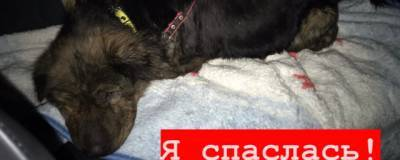 В Кировской области неизвестные расстреляли пять собак