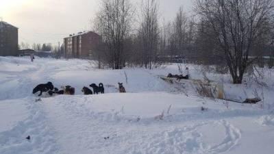 Живодеры застрелили четырех собак в Кировской области