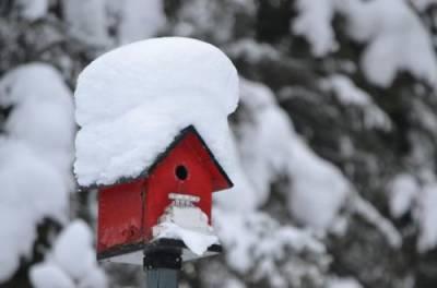 Синоптик рассказал, в каких областях Украины задержится зима