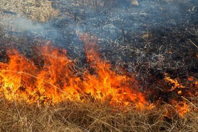 В Украине законом запретили жечь сухую траву