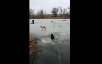 Житель Киева спасал собаку и чуть не утонул