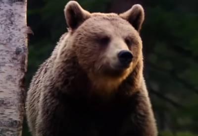 Ему бы еще матрешку и балалайку: в России дикий медведь средь бела дня гонял мужика по центру города. Видео