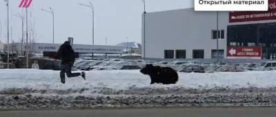 Медведь гоняется за прохожими прямо на улицах российского города. ВИДЕО