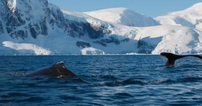 """В Антарктиде украинские полярники разбудили кита: гигант """"был не очень рад"""" (фото, видео)"""