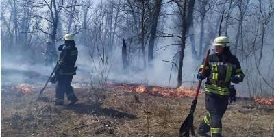 В Днепровском районе Киева неизвестные подожгли траву и камыш - ТЕЛЕГРАФ