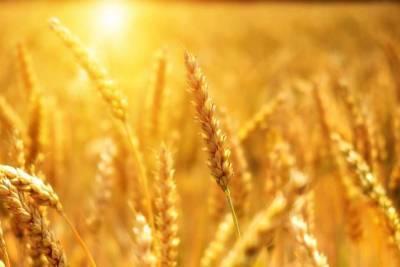 Киев запретил ввоз из России на Украину трех важных продуктов