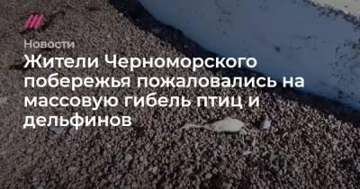 Жители Черноморского побережья пожаловались на массовую гибель птиц и дельфинов