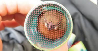 Перевозил на себе: в США арестовали мужчину за контрабанду певчих птиц