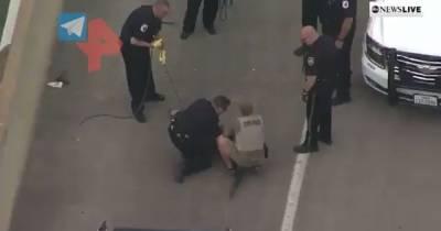 """В американском Техасе крокодил нарушил ПДД и был """"арестован"""" (видео)"""