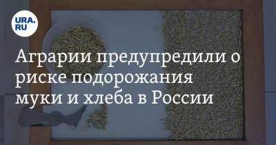 Аграрии предупредили о риске подорожания муки и хлеба в России