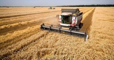 Стоимость на хлеб и муку в России может подняться