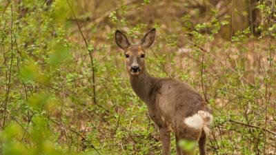 Петербургские экологи пересчитали всех диких животных на территории города