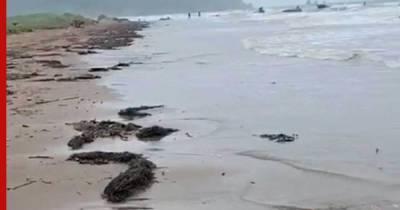 На побережье Сахалина обнаружили следы нефтепродуктов