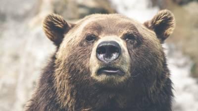 Медведь напал на жителя Сахалина и пытался снять с него скальп