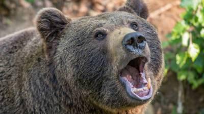 Житель Сахалина выжил после нападения медведя
