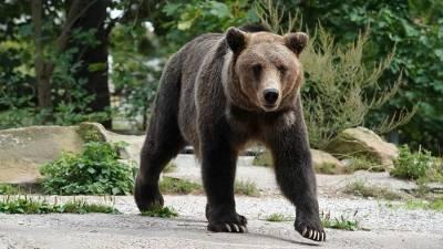 Житель Сахалина попал в больницу после нападения медведя