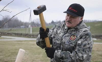 После записи переговоров — абсурдные версии: что важнее всего для Лукашенко (Delfi)