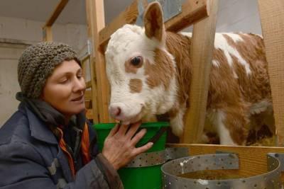 На гранты начинающим фермерам в Липецкой области выделено 62 миллиона рублей
