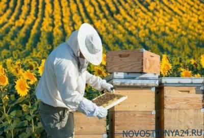 Приморские пчеловоды готовы в два раза увеличить производство меда ради экспорта