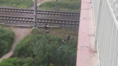 В Невском районе Петербурга обнаружили труп женщины