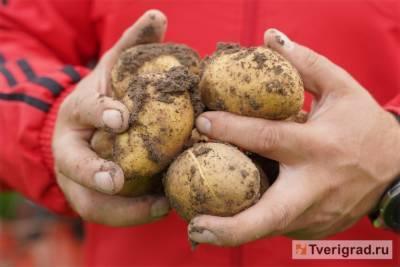 Владимир Путин объяснил, почему в России бананы дороже картошки