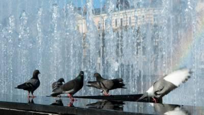 В субботу воздух в Петербурге прогреется до +27 градусов