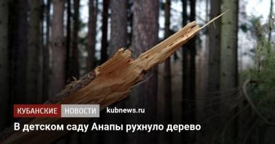 В детском саду Анапы рухнуло дерево