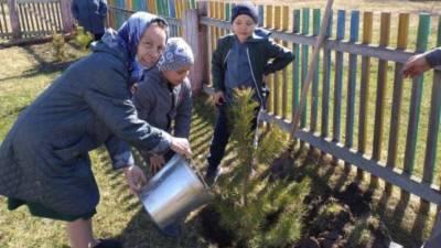 Более 130 тысяч саженцев посадили в Тюменской области в рамках акции «Сад памяти»