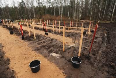 «Сад Памяти»: по всей Ленобласти высадили около 217 тысяч деревьев в рамках акции