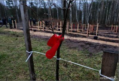 В Ленобласти высадили более 217 тыс. деревьев в рамках акции «Сад Памяти»