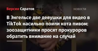 В Энгельсе две девушки для видео в TikTok насильно поили кота пивом: зоозащитники просят прокуроров обратить внимание на случай