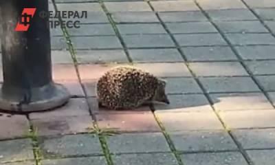 Губернатор Ставрополья во время рабочего дня публикует видео с ежиками