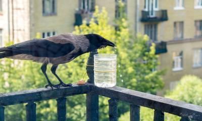 Жители Васильевского острова позаботились о птицах в жару