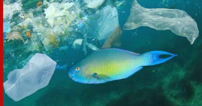 Новый способ борьбы с пластиковым мусором предложили в Японии