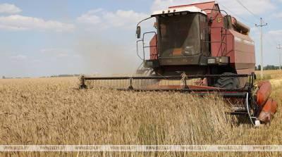 ФОТОФАКТ: В Гомельской области началась массовая уборка зерновых