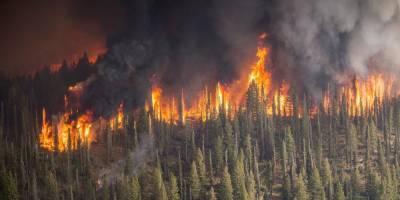 Кремль объяснил, почему российские самолеты тушат пожары в других странах вместо российских регионов