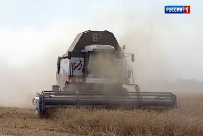 Два миллиона тонн зерна: донская жатва набирает ход