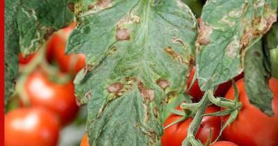 Пятна на листьях помидоров: в чем причина и как бороться