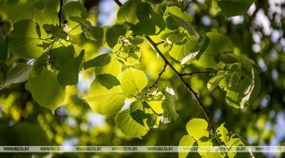 В Гомельской области прижились почти 90% высаженных осенью и весной деревьев