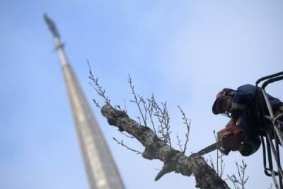 Свердловский губернатор поручил вырубить все тополя в Екатеринбурге